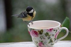 Chickadee on tea cup.too sweet! Pink Garden, Rose Cottage, My Tea, Little Birds, Lipton, Bird Watching, Beautiful Birds, Beautiful Things, Simply Beautiful