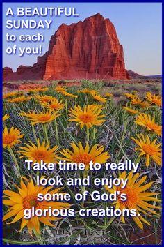 Sunday Morning, Good Morning, Happy Sunday Images, Morning Blessings, Sunday Quotes, Mornings, Blessed, Buen Dia, Bonjour