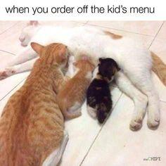 Funniest Cat Memes – 20 Pics
