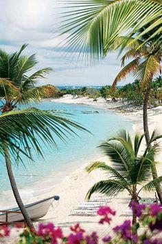 Feel the breeze in La Romana, Dominican Republic #realpalmtrees #palm Trees #awesomeview Beautiful