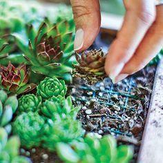 Quadros e Jardins Verticais de Suculentas | Paisagismo Legal                                                                                                                                                     Mais