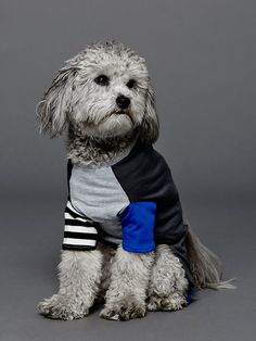Free People Colorblock Doggie Tee, $65.00