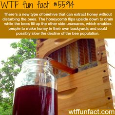 Beehive that extract honey without disturbing the bees - Now, That's! ...What I'm Talk'in about!  ~WTF? awesome fun facts