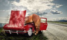 Horses are friends (and mechanics) by John Wilhelm, via 500px