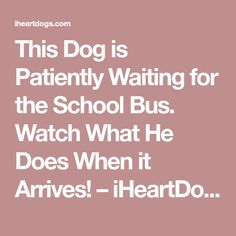 This Dog is Patiently Waiting for the School Bus. Watch What He Does When it Arrives! – iHeartDogs.com