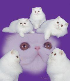 best-catt