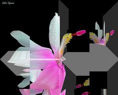 https://flic.kr/p/w2oGeJ | Espaço tridimensional com flor de maio