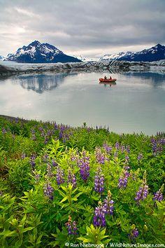 Sheridan Glacier, Chugach National Forest, Cordova, Alaska