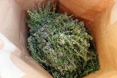 Bylinky jsou v plné síle, sklízím ostošest a domov parádně voní při jejich sušení Herbs, Herb, Medicinal Plants