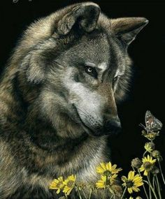 wolf and butterfly - Fur heaven's sake org.