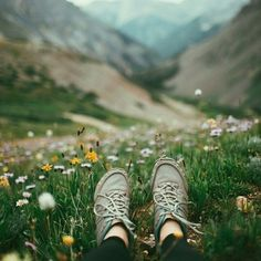 laying in a mountain meadow