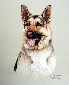 "That's My Dog ""German Sheperd"" -  Paintings by Jim Killen"