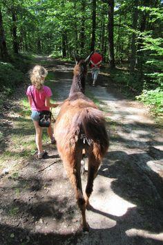 """Nie codziennie widzimy takie rzeczy w lesie - powiedział przypadkowy turysta, który spotkał nas na spacerze... Bo tym razem zdecydowaliśmy (bo był z nami jeszcze kolega) się na spacer w towarzystwie lam i alpak. Tak, w Polsce. Dokładnie niedaleko Lini, miejscowości na Kaszubach, w gospodarstwie agroturystycznym """"Alpaki na Kaszubach"""". Atrakcja? A pewnie! Bo wystarczyło zadzwonić i uprzedzić, że się wybieramy, awłaściciel gospodarstwa był gotowy na nasz przyjazd - przez 1,5 godzi..."""