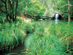 Explore this beautiful walking track that leads from Kondalilla Falls down the escarpment into a lush rainforested valley then climbs up the ridge again to return. Walkabout, Close To Home, Queensland Australia, Sunshine Coast, Falling Down, Day Trips, Climbing, Lush, National Parks