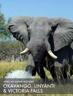 African safari tour: Okavango, Linyanti & Victoria Falls