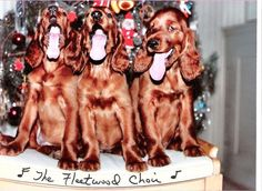 Fleetwood Farms Irish Setters - Our photos
