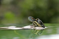 The Turtle by teguh santosa on 500px