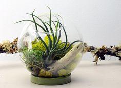 Table Terrarium avec bague céramique - Air plante - Holiday Home Decoration - vert cadeau