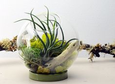 Table Terrarium with ceramic ring  Air Plant  by PinkSerissa, $45.00