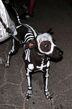 I wish I had a dog to do this to! I would so go as the Corpse bide! eeeep!