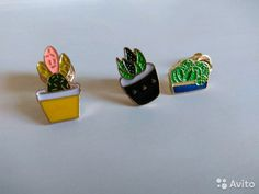 Значки. Суккулент, кактус и алоэ— фотография №1