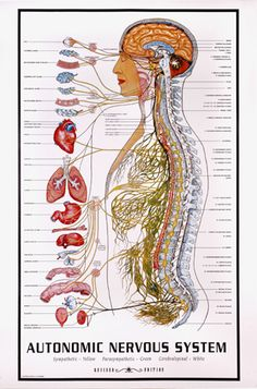 Answering the question: what is Biodynamic Craniosacral Therapy?