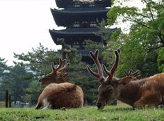 nara japan | the ancient japanese city of nara an hour east of osaka might be most ...