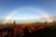 Denali National Park | Denali National Park, national park, denali park, park, beautiful park