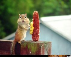 what? no....I didn't eat the corn
