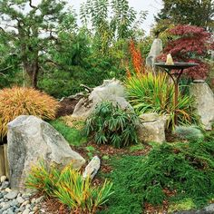 Extend the gardening season by incorporating fun fall foliage and evergreens into your rock garden. In this Asian-style vignette, large boulders anchor plantings of Japanese and Siberian irises, which feature foliage highlighted with dramatic tips of gold. A native shore pine in the background shows off a sculptural form in keeping with Japanese garden design./