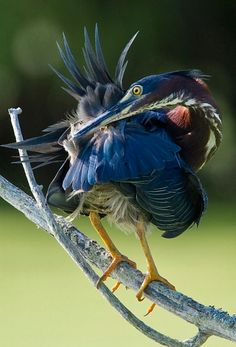 Bird, Animals, Beauty, Birds, Fotografia, Animales, Animaux, Animal, Animais