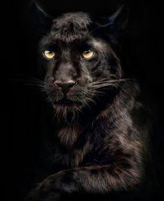 belmar cougar women Backpage seizure.