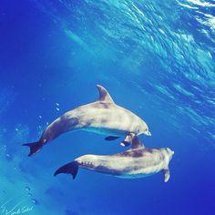 Photographer: Vitaliy Sokol/vitaliy-sokol.com    p.s. follow  @traviseaton  - @underwater_world- #webstagram