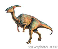 Parasaurolophus is a genus of ornithopod dinosaur that lived in what is now North America during the Late Cretaceous Period, about 76.5–73 million years ago.