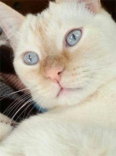 Pretty cat.