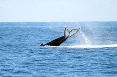 Whale watching in Bar Harbor, Maine is our next adventure, can't wait.......