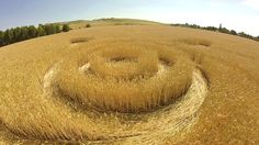 Crop Circle at Groziethen (2), Brandenburg, Germany. Reported 7th July 2015