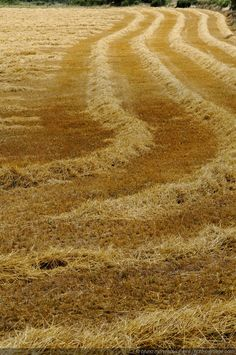 """.I remember """"working"""" in the hay field when I was a child. Some of my favorite memories!  Square bales. ;-)"""