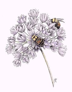 Bees Drawing - Rusty Patched Bumble Bee by Angie Lilienthal Bee And Flower Tattoo, Bee On Flower, Flower Tattoos, Honey Bee Tattoo, Bumble Bee Tattoo, Bee Sketch, Bee Drawing, Bee Painting, Bee Images