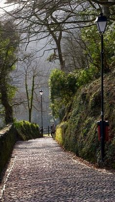 Path Down to Clovelly, Devon, England. England seems to have a lot of pretty sites to see, I might have to take a trip that way one day