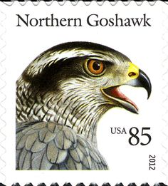 U.S. Northern Goshawk Stamp #Birds #Goshawk