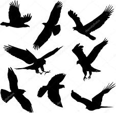 Pb, black , aves
