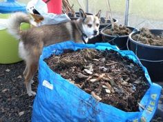 Hur ska man göra med Bokashi under vintern då? Garden Compost, Gardening, Garden Inspiration, Green, Nature, Plants, Animals, Outdoor, Cottage