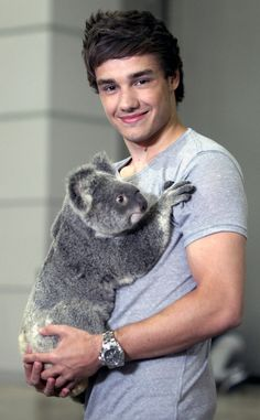 liam payne and a koala :) one direction, 1D