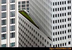 Espacios verdes en ciudades | Risa Sin Más
