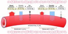 hydrostatic pressure   osmotic pressure