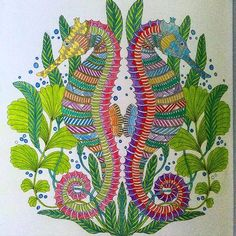 Swirling Seahorses — Tropical Wonderland. By Millie Marotta ...