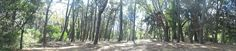 Bosque Gesell