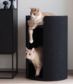 Cat Throwing Up, Cat Furniture, Habitats, Alice, Villa, Animals, Cats, Animales, Animaux