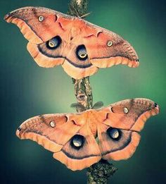 Types of Butterflies - Butterflies are one of the most adored insects for their enchanted beauty and representation of good luck and positive change. Beautiful Bugs, Beautiful Butterflies, Types Of Butterflies, Cool Bugs, Insect Photography, Moth Caterpillar, Bugs And Insects, Mundo Animal, Butterfly Wings